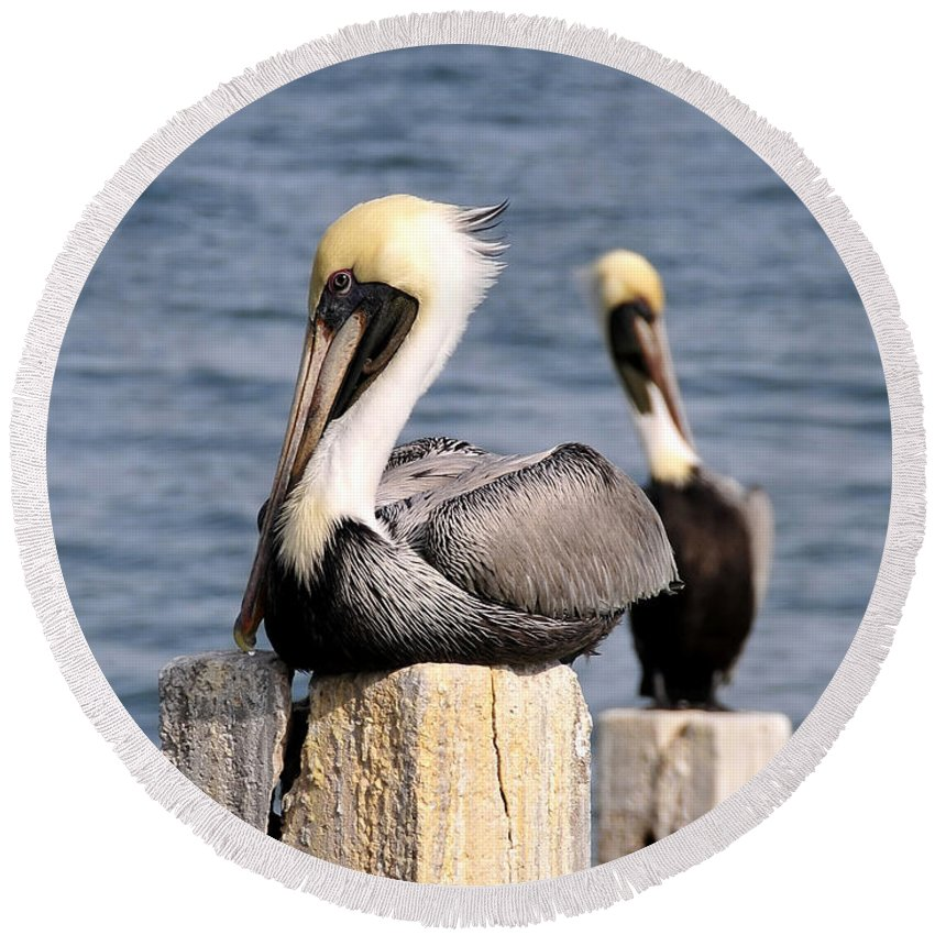Wildlife Photography Round Beach Towel featuring the photograph Pelican Pair by David Lee Thompson