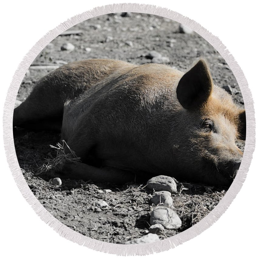 Pig Round Beach Towel featuring the photograph Pig by Mats Silvan
