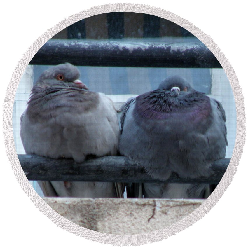 Pigeons Round Beach Towel featuring the photograph Pigeons Perching by Lainie Wrightson