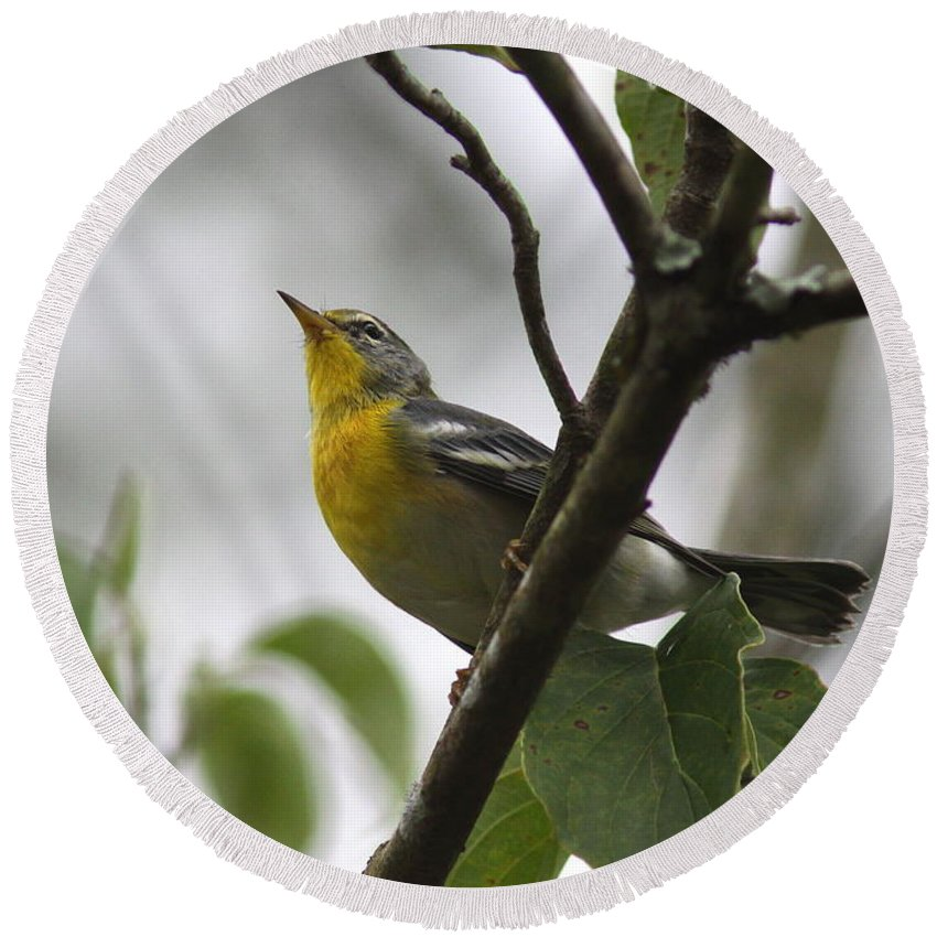 Northern Parula Round Beach Towel featuring the photograph Northern Parula by Travis Truelove