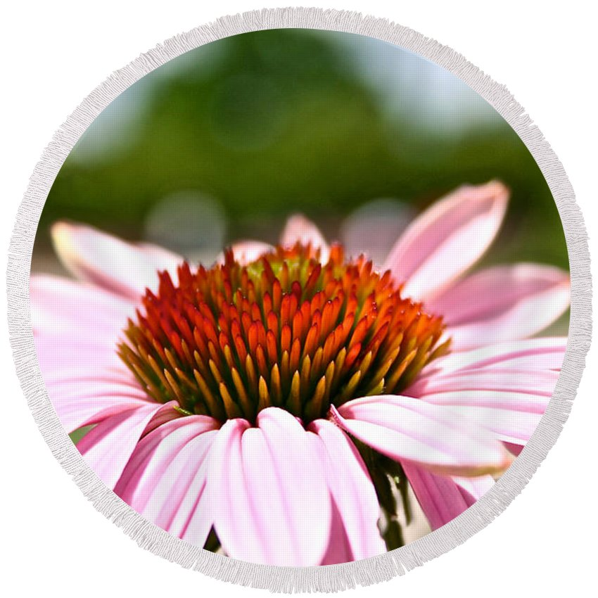 Garden Round Beach Towel featuring the photograph Pink Cone Flower by Susan Herber