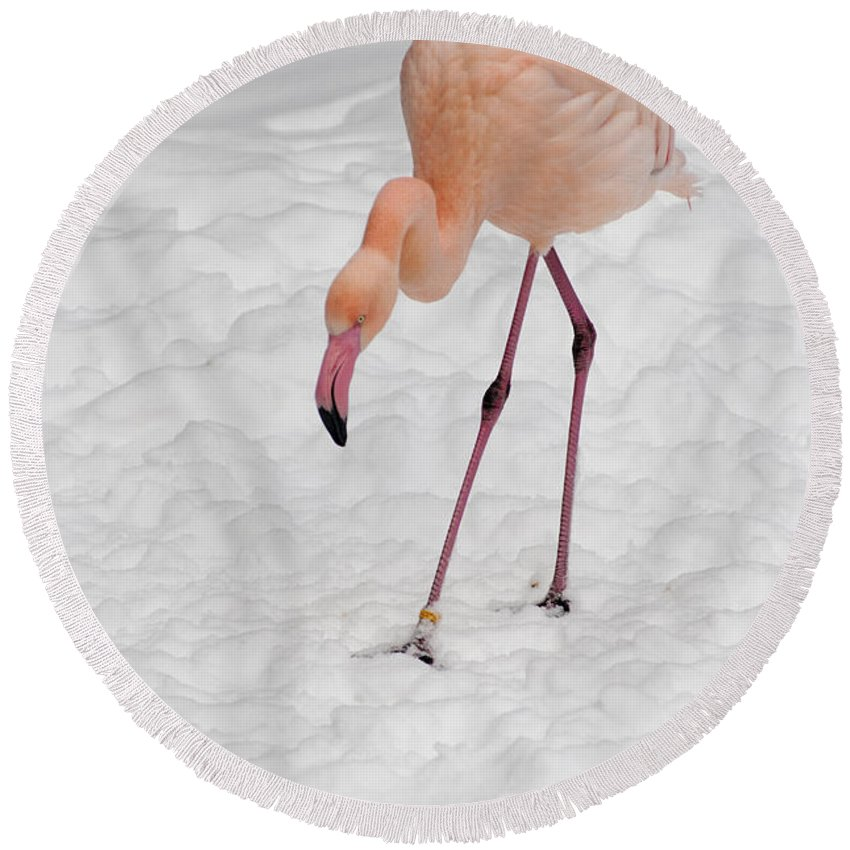 Europe Round Beach Towel featuring the photograph Pink Flamingo by Andrew Michael
