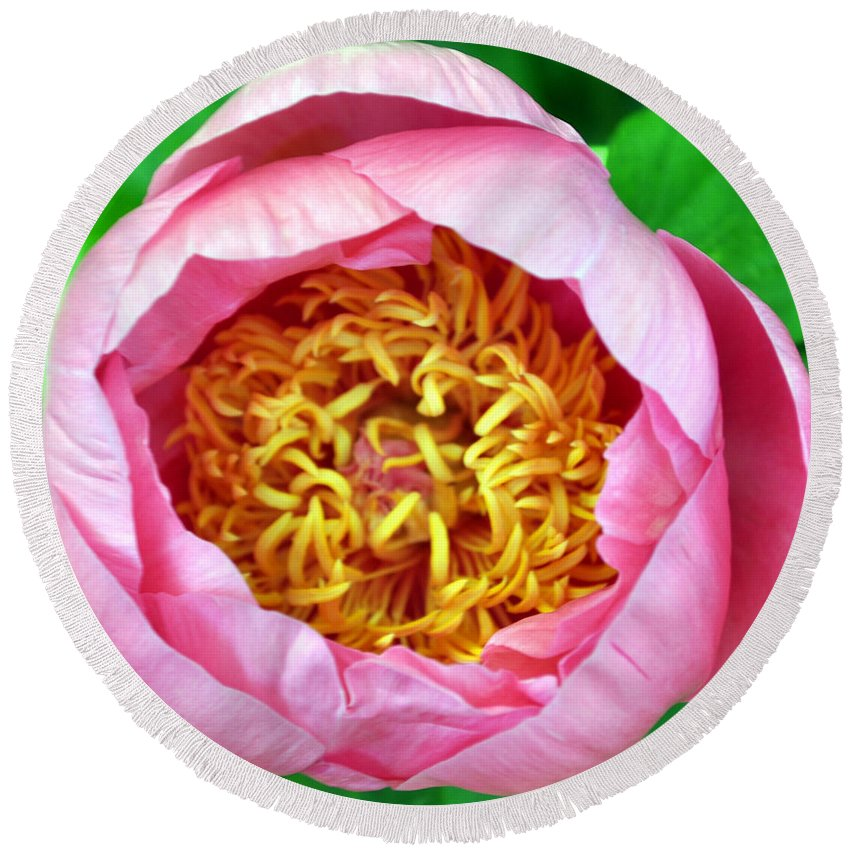 Pink Round Beach Towel featuring the photograph Pink Flower by Matthew Naiden