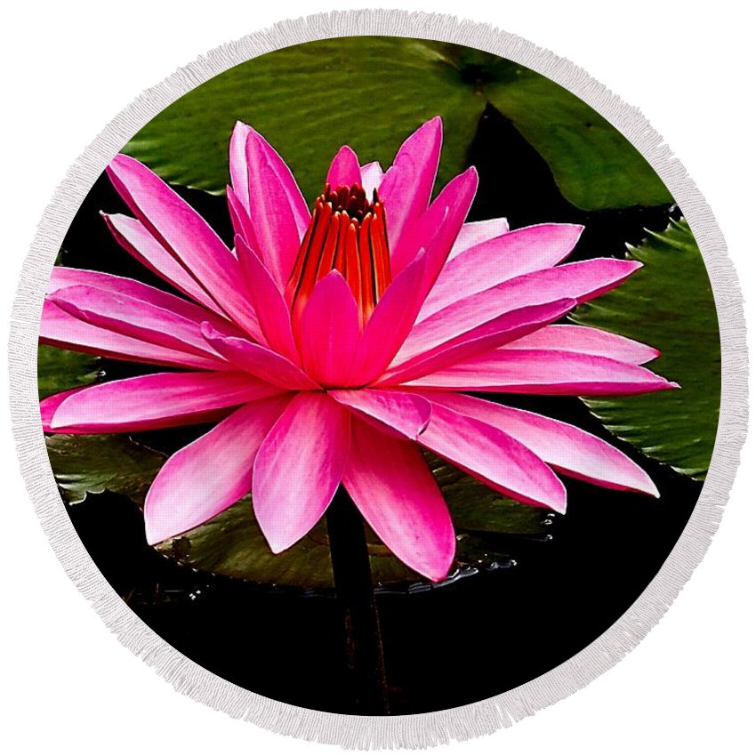 Aquatic Round Beach Towel featuring the photograph Pink Lily by Nick Zelinsky