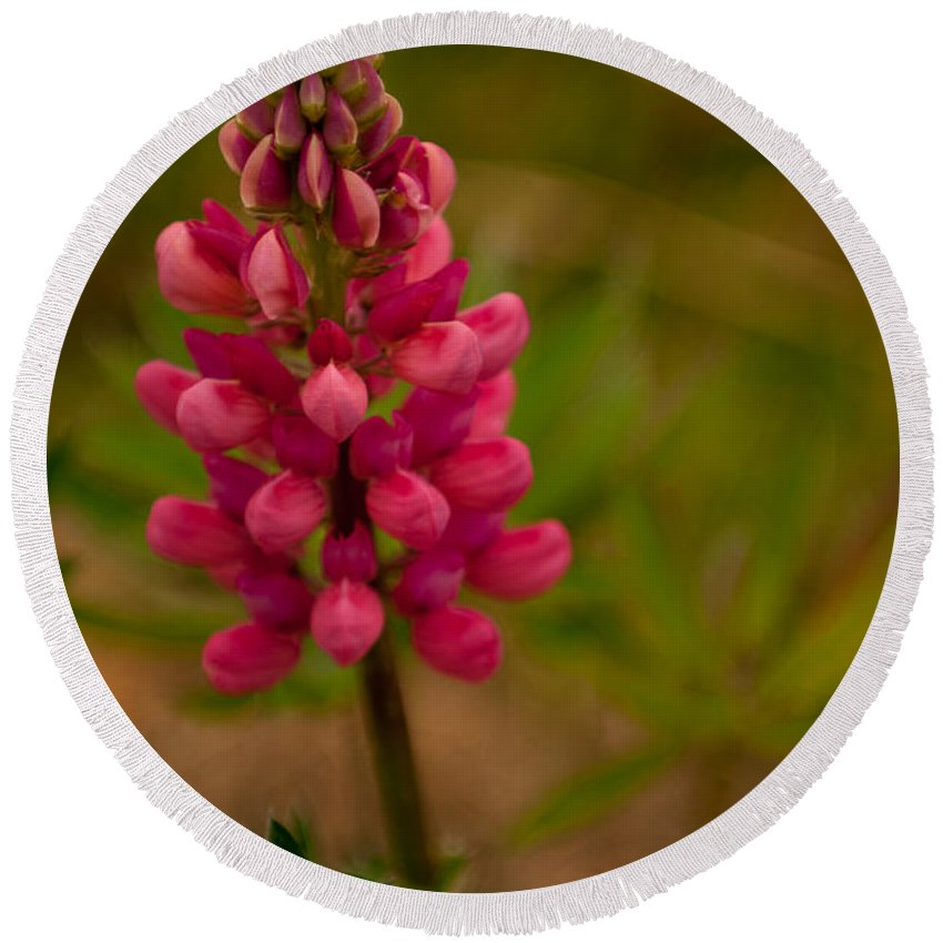 pink Lupine Round Beach Towel featuring the photograph Pink Lupine by Paul Mangold