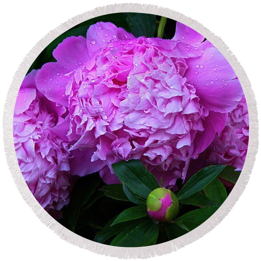Pink Peonies Round Beach Towel featuring the photograph Pink Peonies In The Rain by Byron Varvarigos