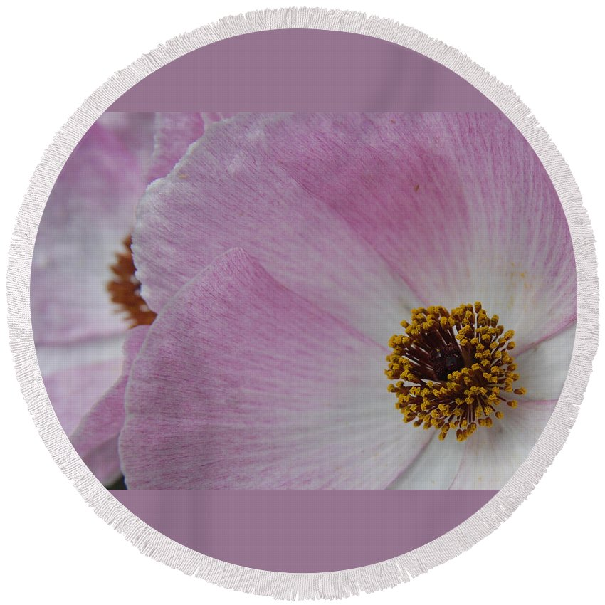 Poppy Round Beach Towel featuring the photograph Pink Prickly Poppy by Beth Gates-Sully