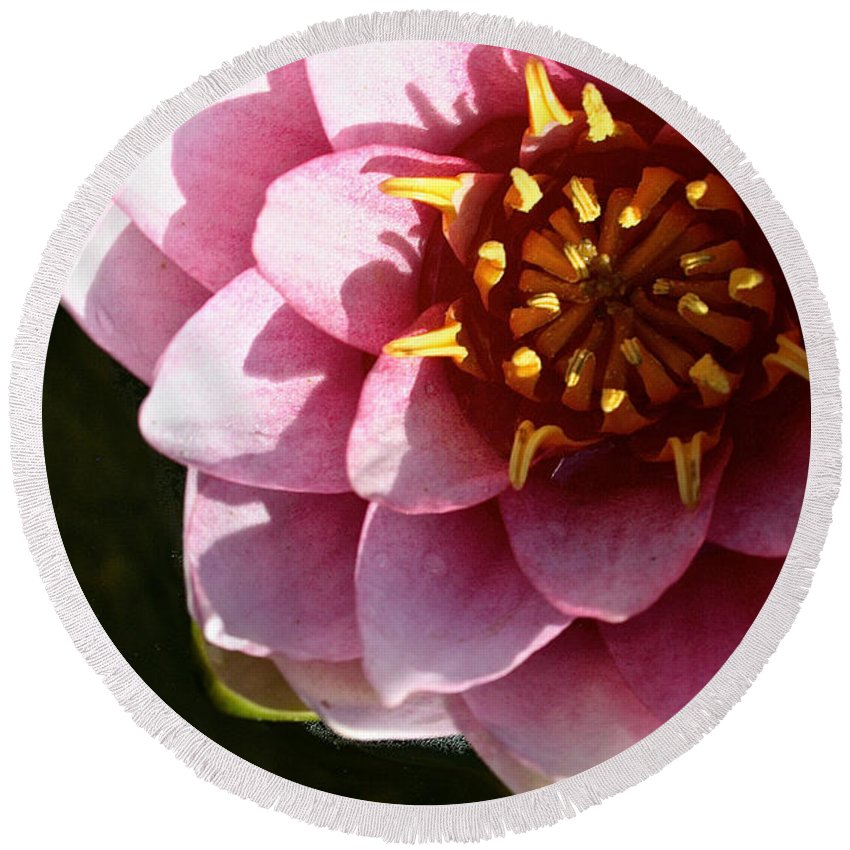 Outdoors Round Beach Towel featuring the photograph Pink Water Lily by Susan Herber