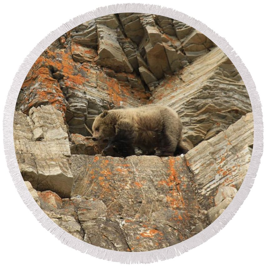 Grizzly Bear Round Beach Towel featuring the photograph Playing Mountain Goat by Adam Jewell