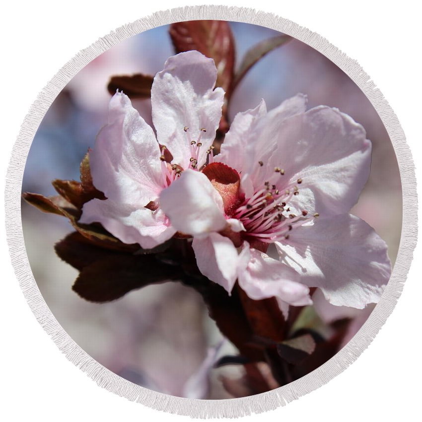 Floral Round Beach Towel featuring the photograph Plum Blossoms 10 by Kume Bryant