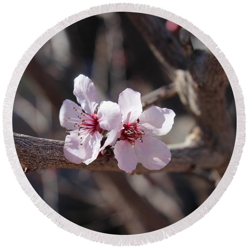 Floral Round Beach Towel featuring the photograph Plum Blossoms 2 by Kume Bryant