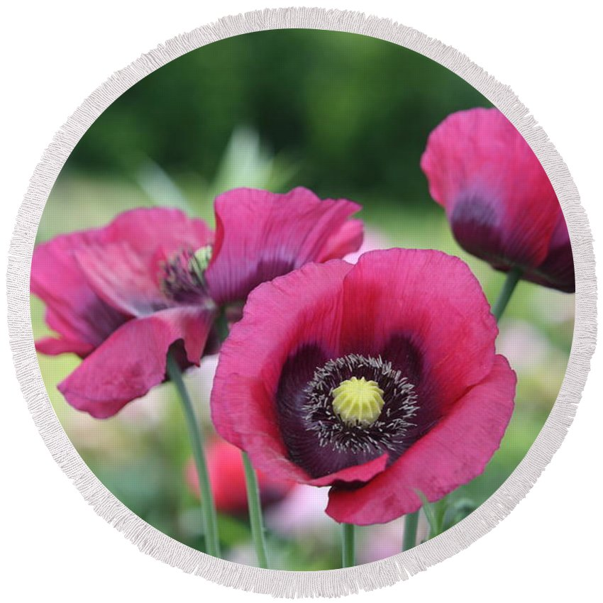 Poppy Round Beach Towel featuring the photograph Poppies by Donna Walsh