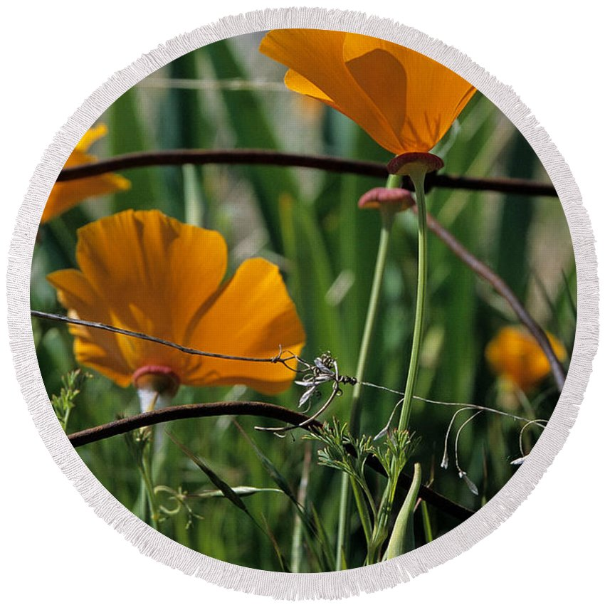 California Poppies Round Beach Towel featuring the photograph Poppies by Sharon Elliott