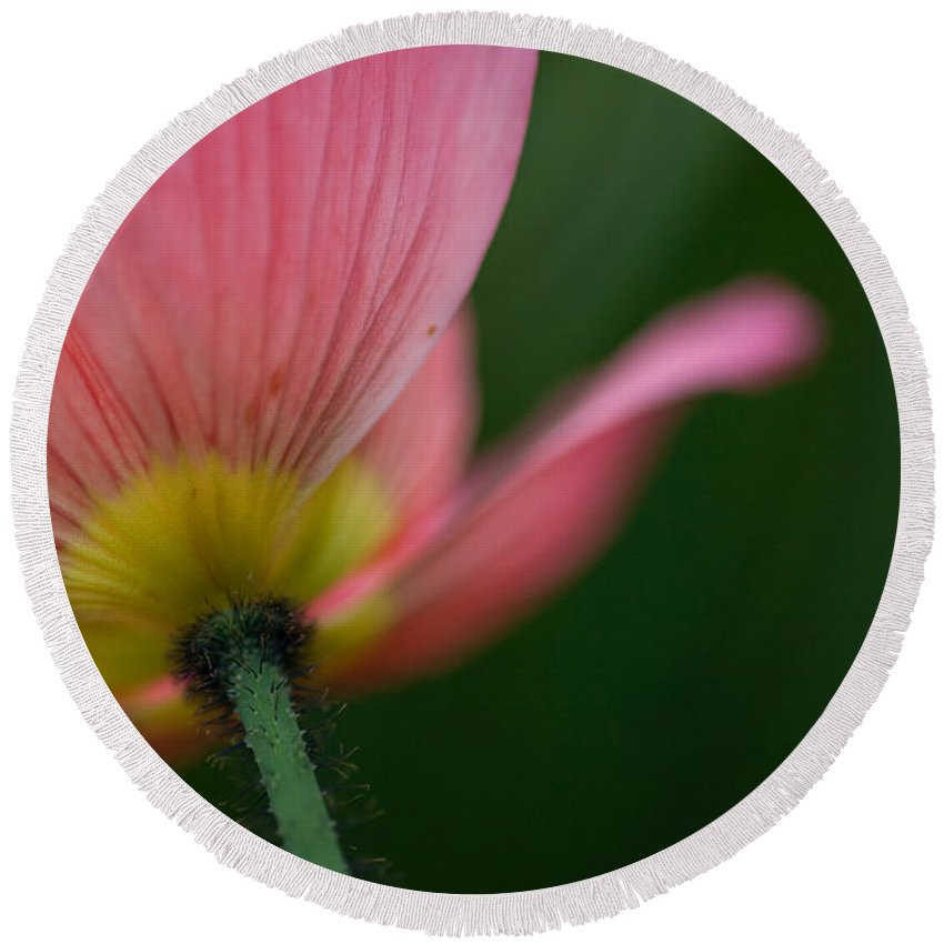 Poppy Round Beach Towel featuring the photograph Poppy Details by Mike Reid