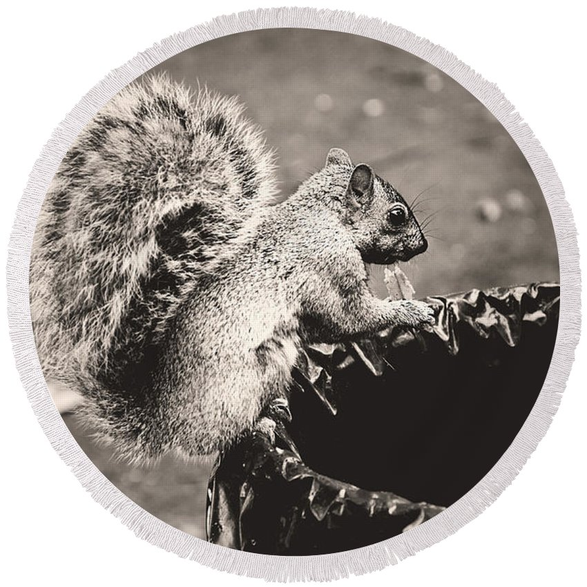 Squirrels Round Beach Towel featuring the photograph Portrait Of A Trash Picker by Valerie Rosen
