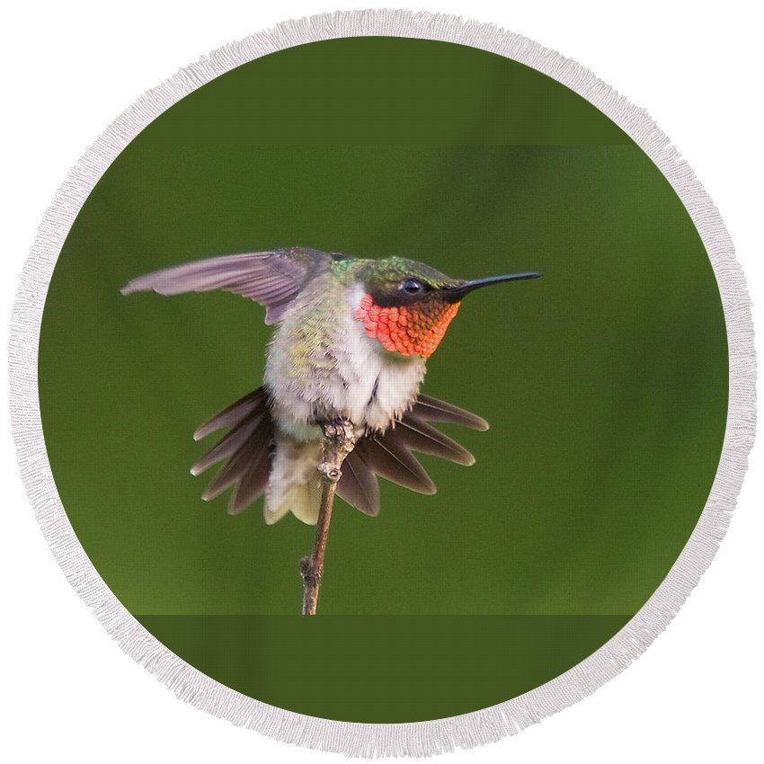 Bird. Hummingbird Round Beach Towel featuring the photograph Prepare To Launch by Steve Stuller