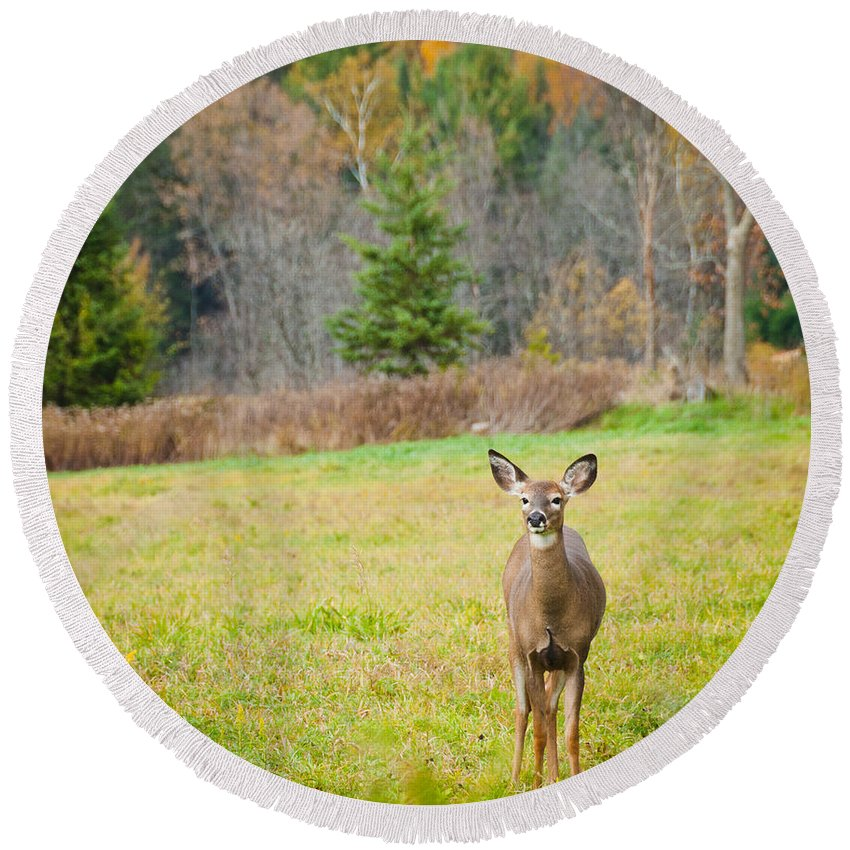Deer Round Beach Towel featuring the photograph Pretty by Cheryl Baxter
