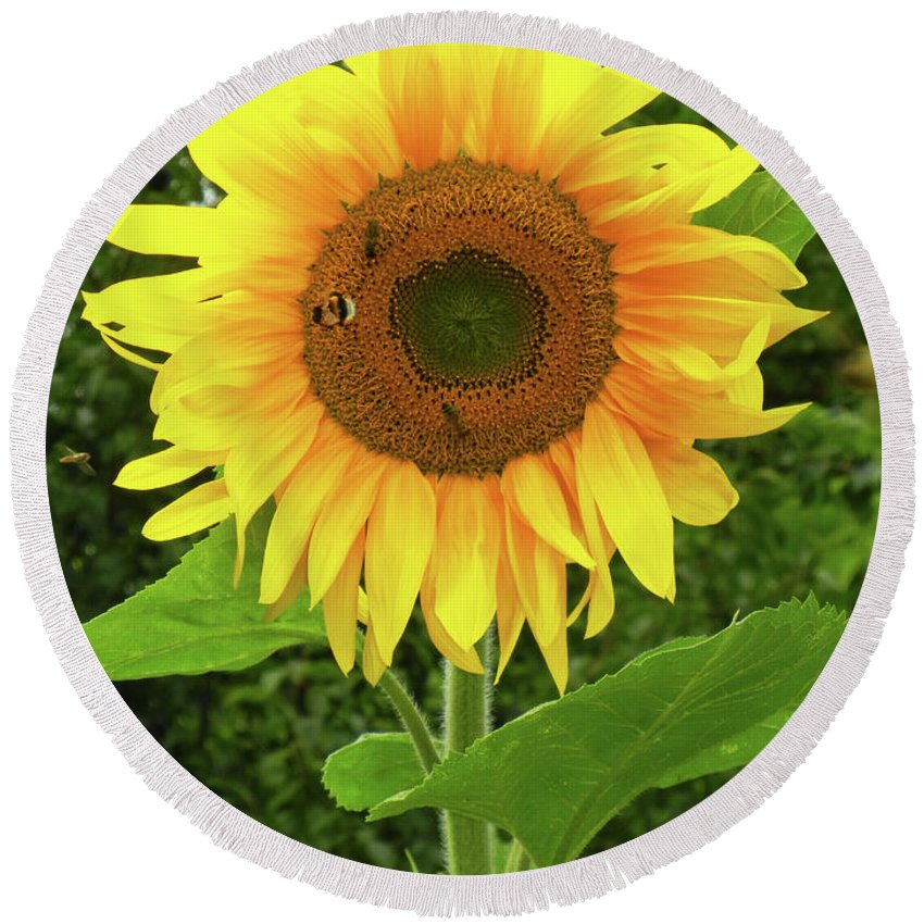 Pretty Round Beach Towel featuring the photograph Pretty Sunflower by Mariola Bitner