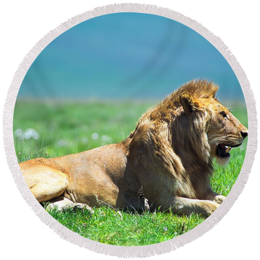 Africa Round Beach Towel featuring the photograph Pride by Sebastian Musial