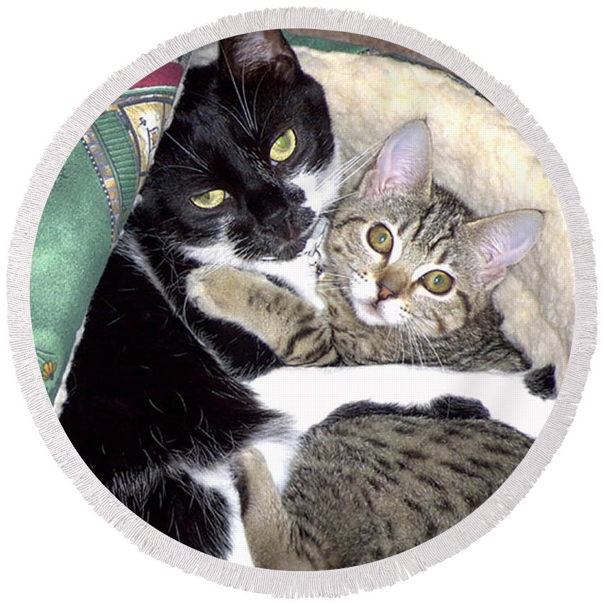 Cat Round Beach Towel featuring the photograph Princess And Little Rocky by Carl Deaville