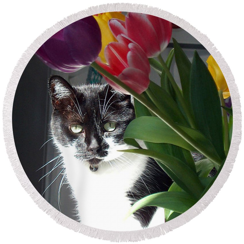 Cat Round Beach Towel featuring the photograph Princess The Cat And Tulips by Carl Deaville