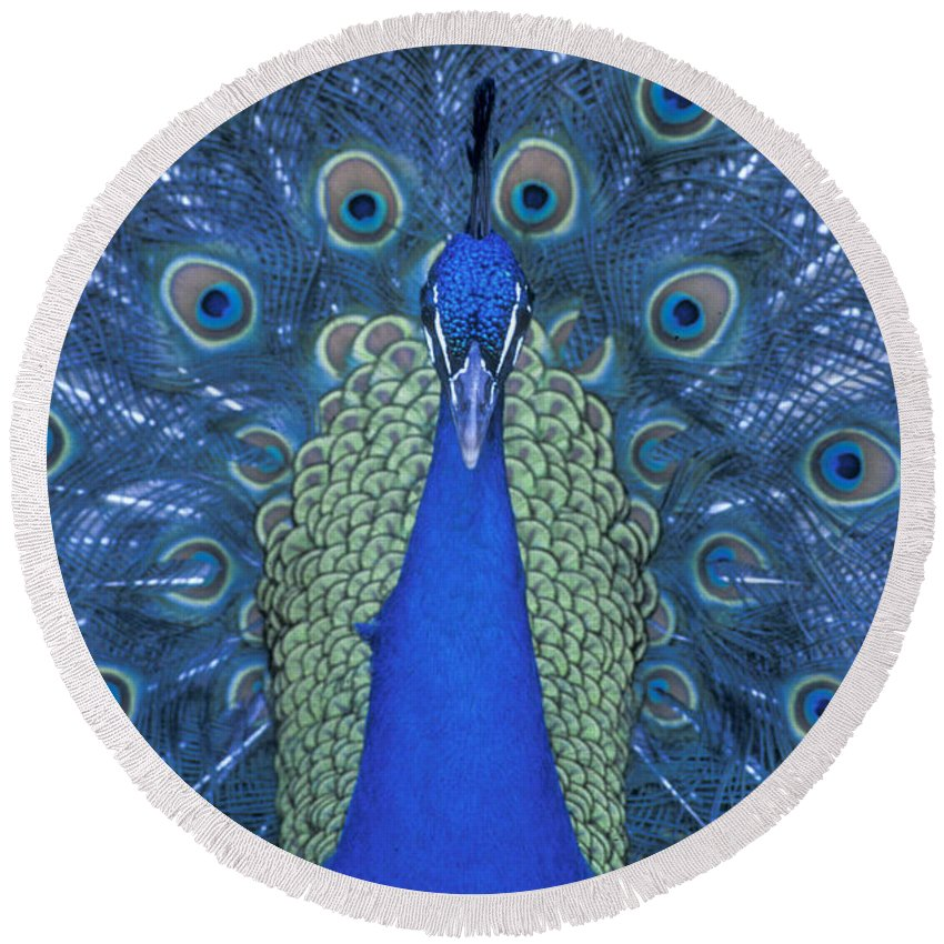 Bronstein Round Beach Towel featuring the photograph Proud Peacock by Sandra Bronstein