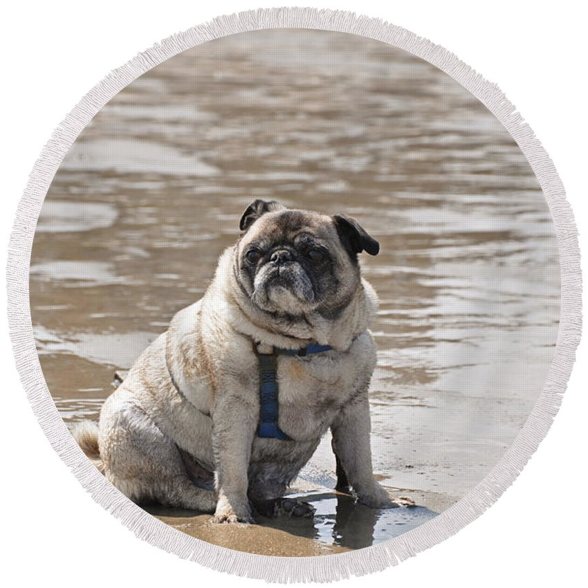 Pug Round Beach Towel featuring the photograph Pug Can't Be Budged by Christine Stonebridge