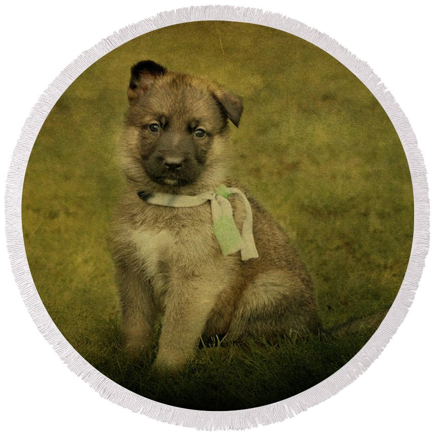 German Shepherd Round Beach Towel featuring the photograph Puppy Sitting by Sandy Keeton