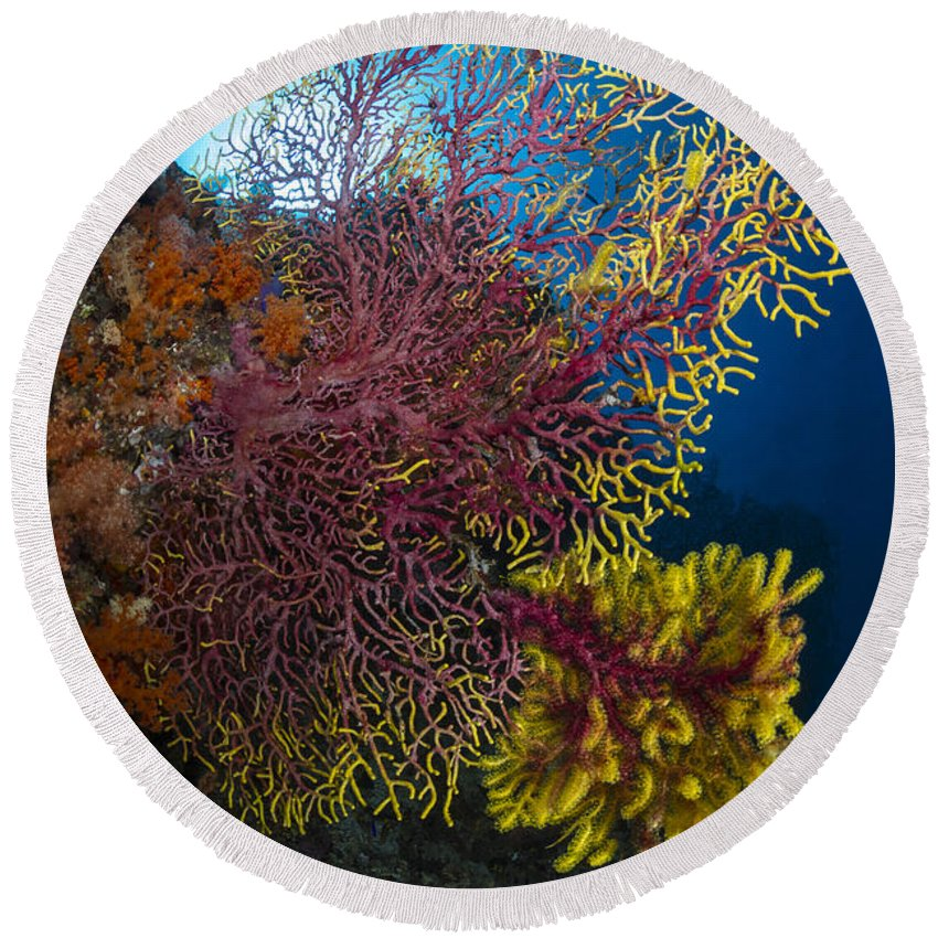 Raja Ampat Round Beach Towel featuring the photograph Purple And Yellow Sea Fan In Raja by Todd Winner