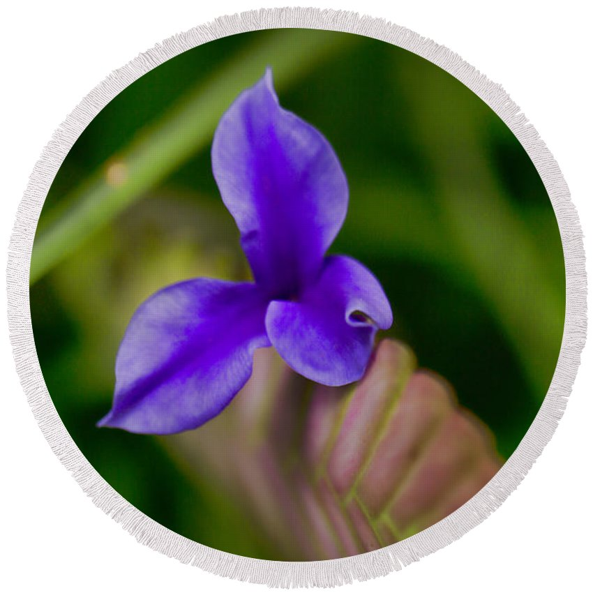 Purple Round Beach Towel featuring the photograph Purple Bromeliad Flower by Douglas Barnard