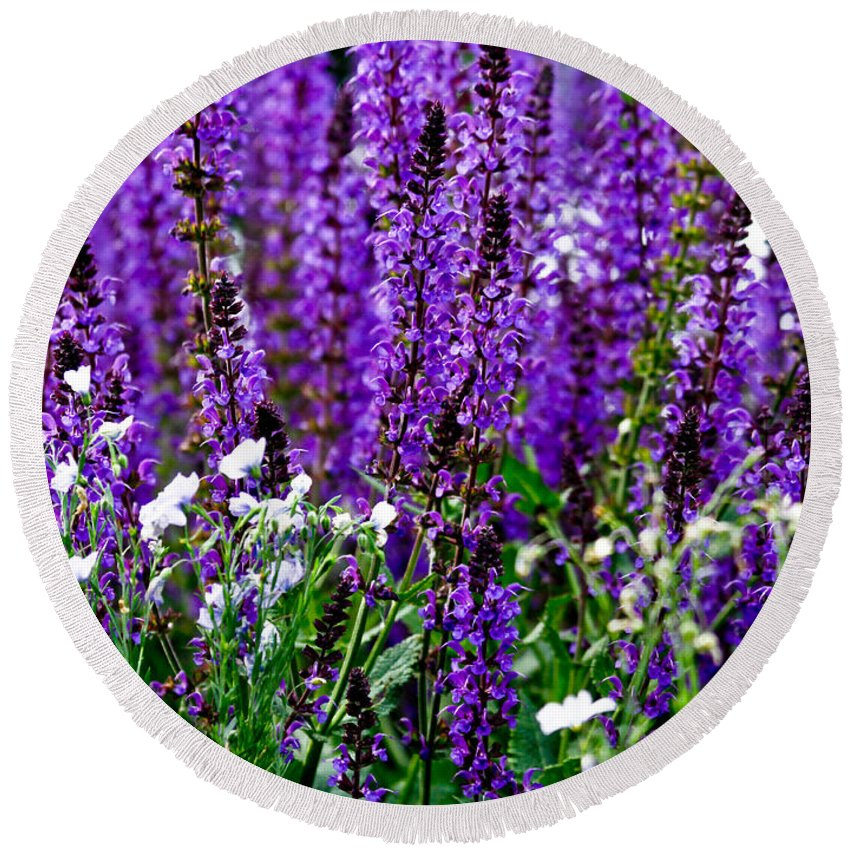 Lavender Round Beach Towel featuring the photograph Purple Lavender Flower In Bloom by Carol F Austin