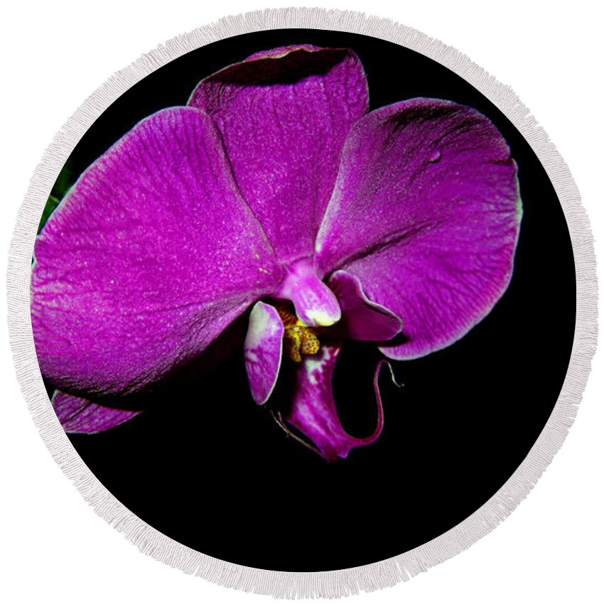 Purple Orchid Round Beach Towel featuring the photograph Purple Orchid by Douglas Barnard