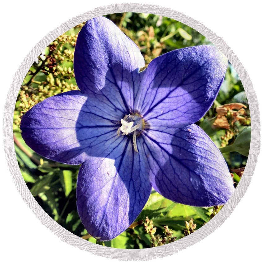 Chinese Round Beach Towel featuring the photograph Purple Petals by Art Dingo