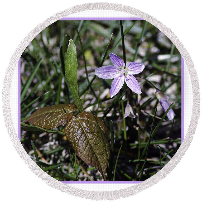 Purple Round Beach Towel featuring the photograph Purple Spring Trail Flower by LeeAnn McLaneGoetz McLaneGoetzStudioLLCcom