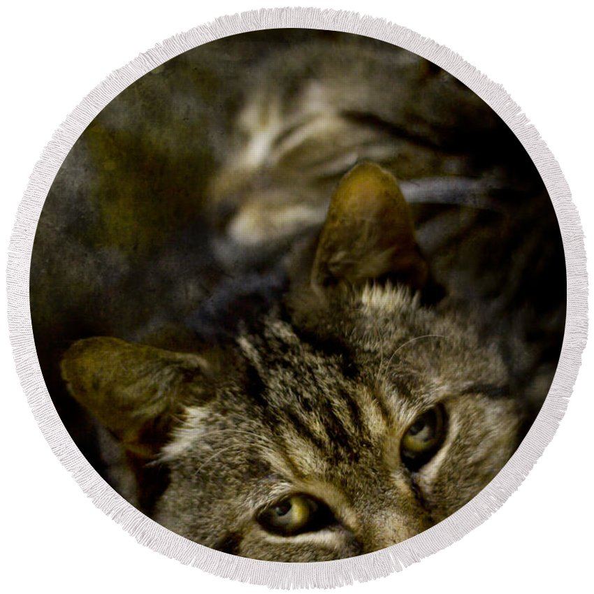 Cat Round Beach Towel featuring the photograph Purr by Angel Ciesniarska