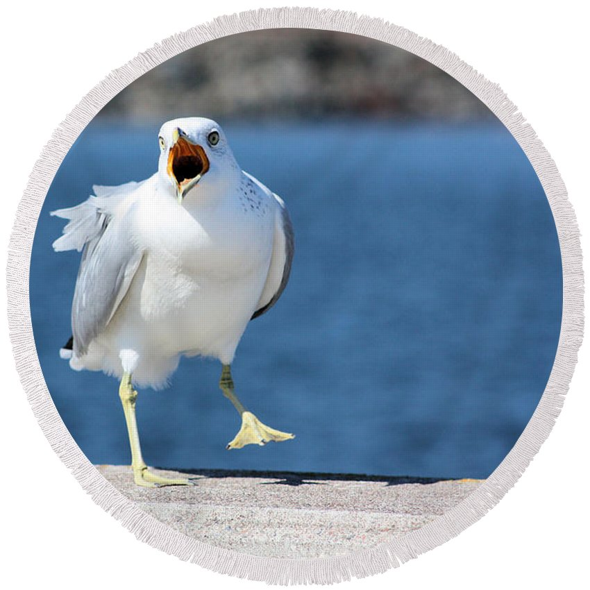 Seagull Round Beach Towel featuring the photograph Putting His Foot Down Herring Gull by Kristin Elmquist