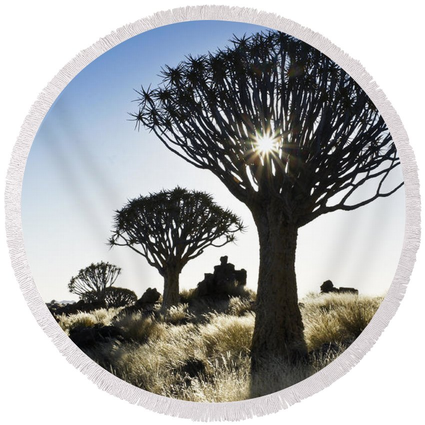 Africa Round Beach Towel featuring the photograph Quivertree Starburst by Michele Burgess