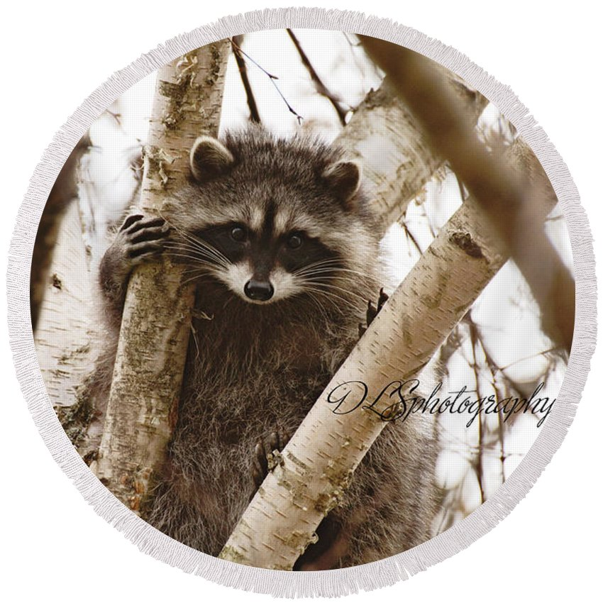 Racoon Round Beach Towel featuring the photograph Racoon by Danielle Silveira