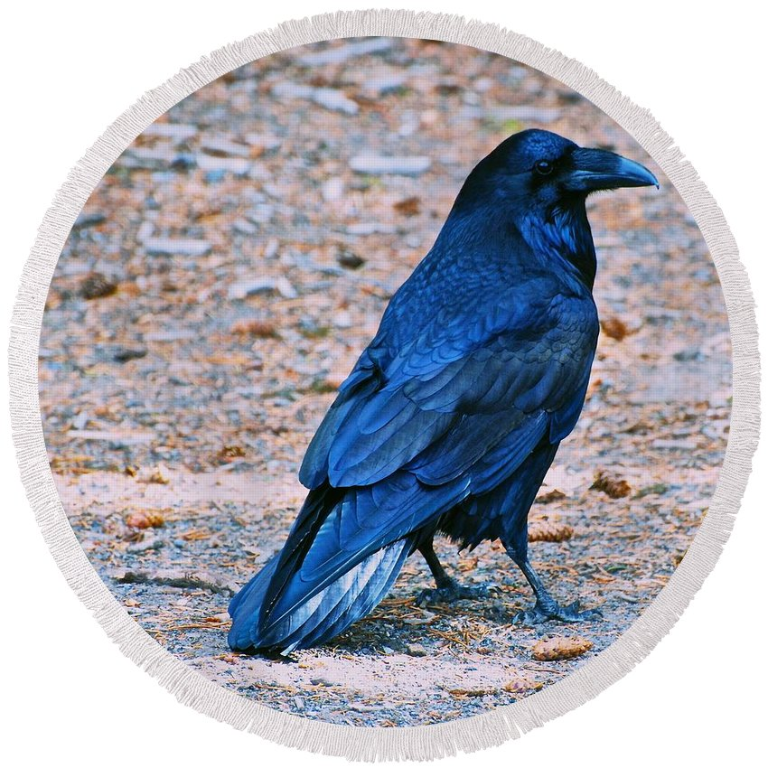 Raven Round Beach Towel featuring the photograph Raven Blue by Eric Tressler