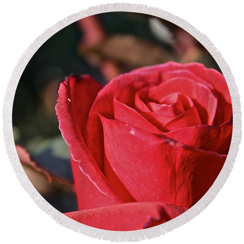Flower Round Beach Towel featuring the photograph Red And Ready For Review by Susan Herber