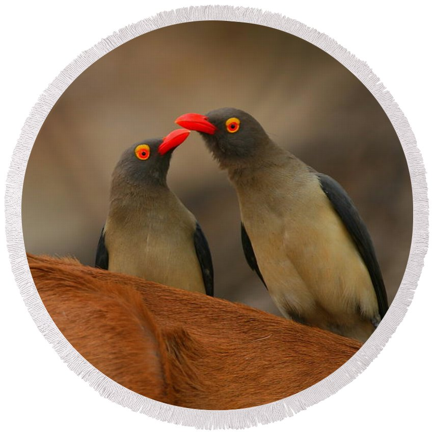 Oxpecker Round Beach Towel featuring the photograph Red-billed Oxpeckers by Bruce J Robinson