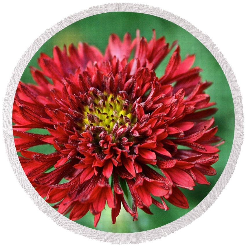 Plant Round Beach Towel featuring the photograph Red Blanket Flower by Susan Herber