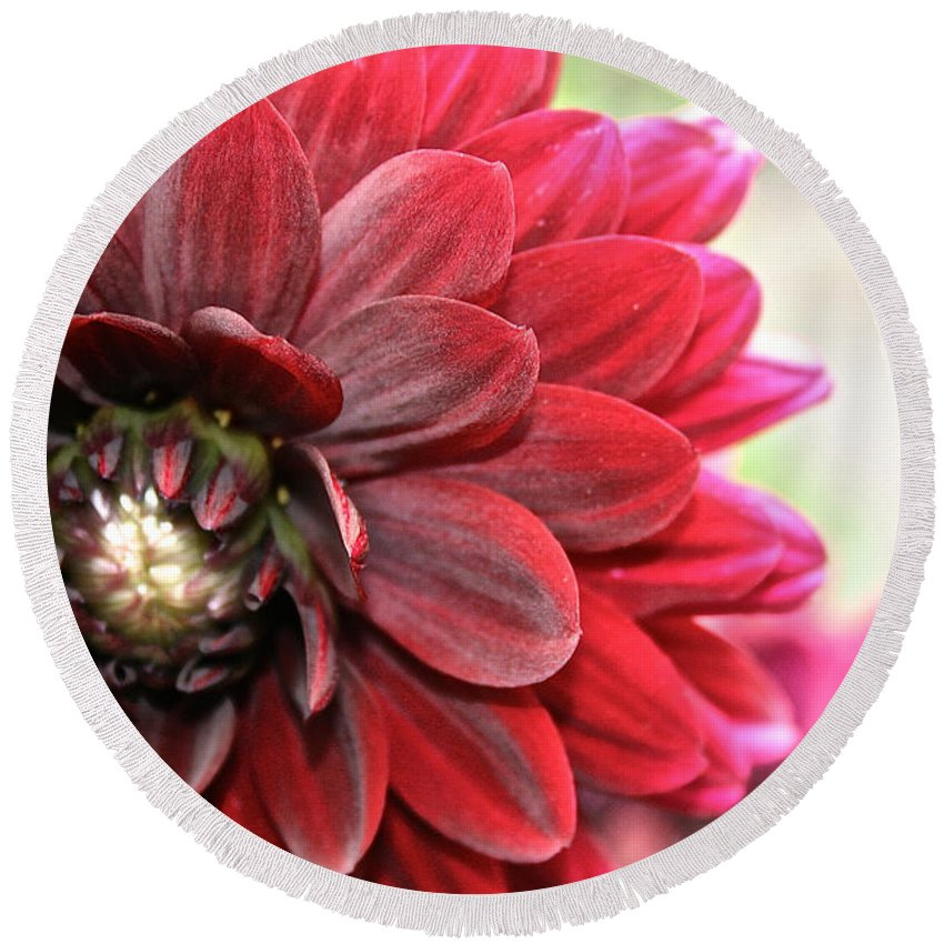 Plant Round Beach Towel featuring the photograph Red Carpet Dahlia by Susan Herber