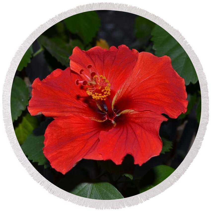 Red Round Beach Towel featuring the photograph Red Hibiscus by Wanda J King