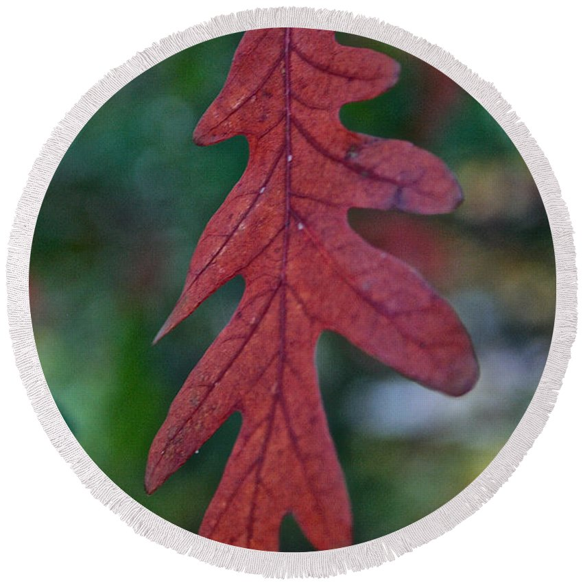 Outdoors Round Beach Towel featuring the photograph Red Leaf Hanging by Susan Herber