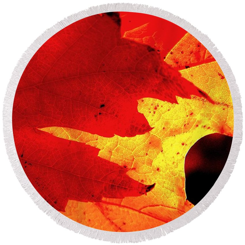 Leaves Round Beach Towel featuring the photograph Red On Gold by Chris Berry