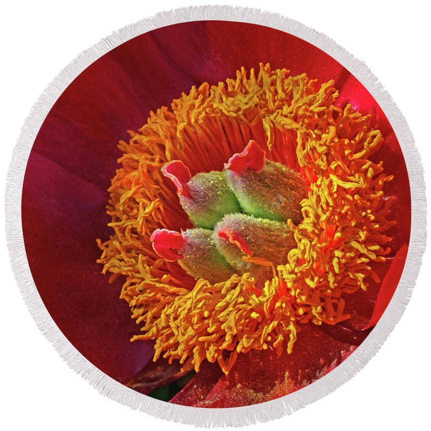 Red Peony Round Beach Towel featuring the photograph Red Peony by Dave Mills