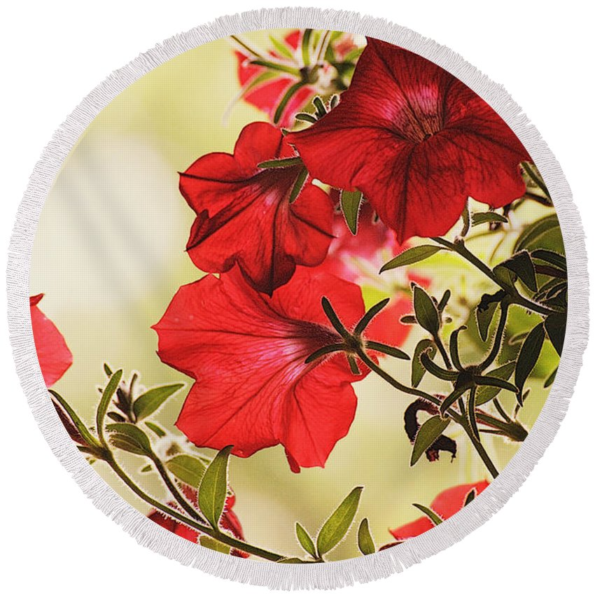 Flowers Round Beach Towel featuring the photograph Red Petunias by Mel Hensley
