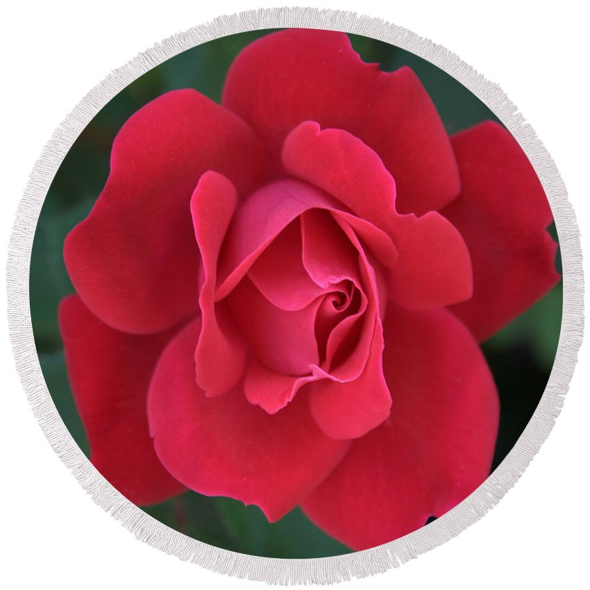 Rose Round Beach Towel featuring the photograph Red Rose by Mel Hensley