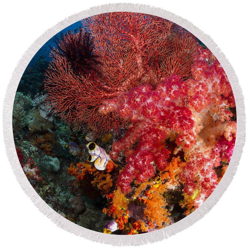 Fish Round Beach Towel featuring the photograph Red Sea Fan And Soft Coral In Raja by Todd Winner